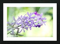 Purple orchid Picture Frame print