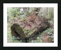 Nurse Log Picture Frame print