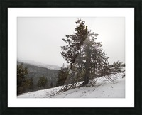 Snowy Mountain Juniper Picture Frame print