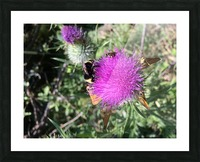 Bug Heaven Picture Frame print