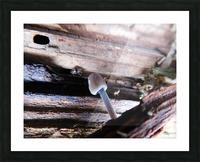 Brave Little Mushroom Picture Frame print