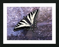 Swallowtail on Stone Wall Picture Frame print