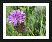 Butterfly on Wildflower Picture Frame print