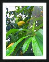 Peach  Picture Frame print
