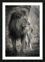 The King of South Africa - 3 Picture Frame print
