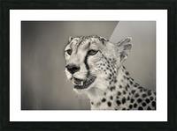 Cheetah Portrait Picture Frame print