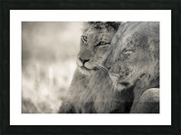 Tenderness Picture Frame print