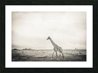 Zebrascape Picture Frame print