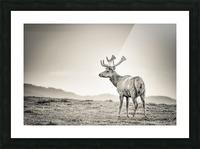 Tule Elk Picture Frame print