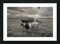 Cowscape Picture Frame print