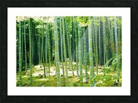 Bamboo Forest Picture Frame print
