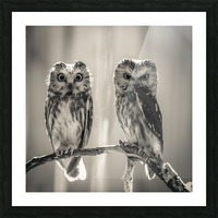 The Odd Couple - B&W Picture Frame print