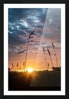 First Light Picture Frame print