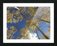 Aspens To Heaven Picture Frame print