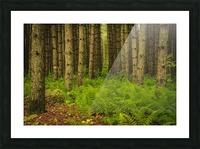 _S9A1813 Modifier Picture Frame print