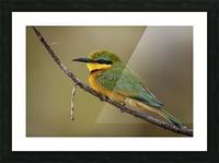164A1450 Modifier Picture Frame print