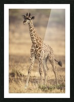 Little Girafe Picture Frame print