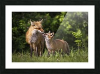 Motherly Love- 2 Picture Frame print