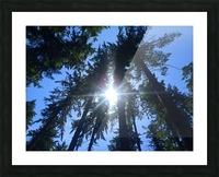 Weyerhaeuser Tree Picture Frame print