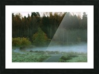 Weyerhaeuser morning Picture Frame print