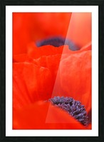 Poppy Heart I Picture Frame print
