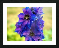 Purple And Blue Picture Frame print