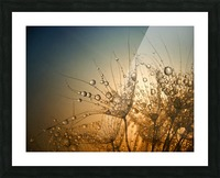 Tender is the Night Picture Frame print