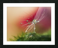 Red Morning Picture Frame print