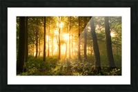 Light in the Forest. Picture Frame print