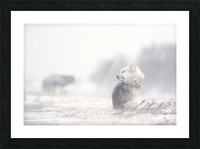 dogs in the storm Picture Frame print