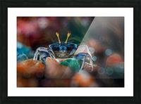 kapiting kacui Picture Frame print
