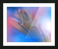 Touch Me Softly... Picture Frame print