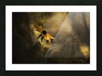 Solaris Picture Frame print