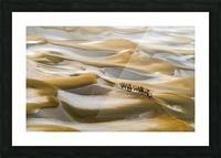 Desert Winter Picture Frame print