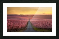 Flowering Picture Frame print