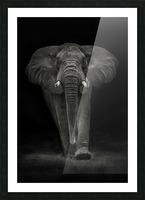 Ngorongoro Bull Picture Frame print