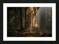 The light in the forest Picture Frame print