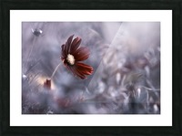 Carmen Picture Frame print