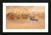 Black Bucks Picture Frame print