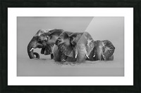 Elephant Crossing The River Picture Frame print