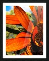 Sunflower  Impression et Cadre photo