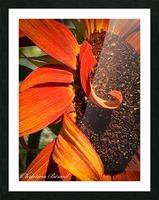 Sun Flowing flowers  Impression et Cadre photo