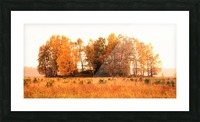 trees of fall Picture Frame print