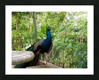 Bird24 Picture Frame print
