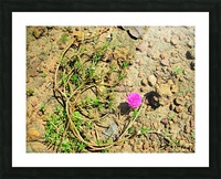 Flower16 Picture Frame print