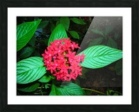 Flower66 Picture Frame print