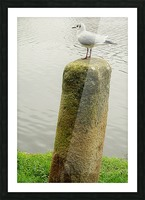 Mouette Picture Frame print