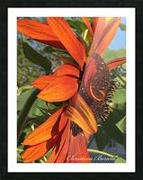 Sunflower seeds  Impression et Cadre photo