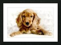Cute Cocker Spaniel Puppy Picture Frame print