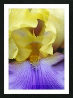 Lavender And Yellow Iris Heart Picture Frame print